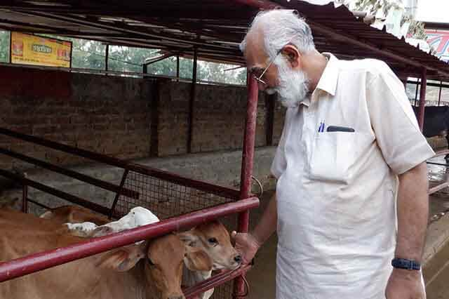 girish jha with cow